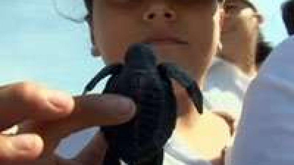 Rilasciati nel Pacifico 4mila neonati di tartarughe