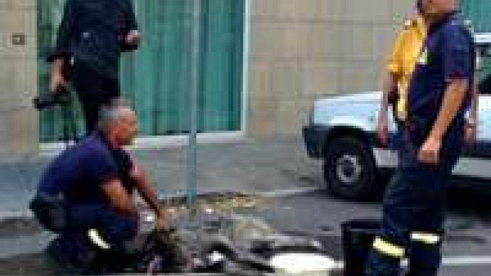 """Cane lasciato in auto al caldo: già consegnata relazione alla magistraturaAPAS, cane lasciato in auto al caldo, """"episodio di gravità estrema"""""""