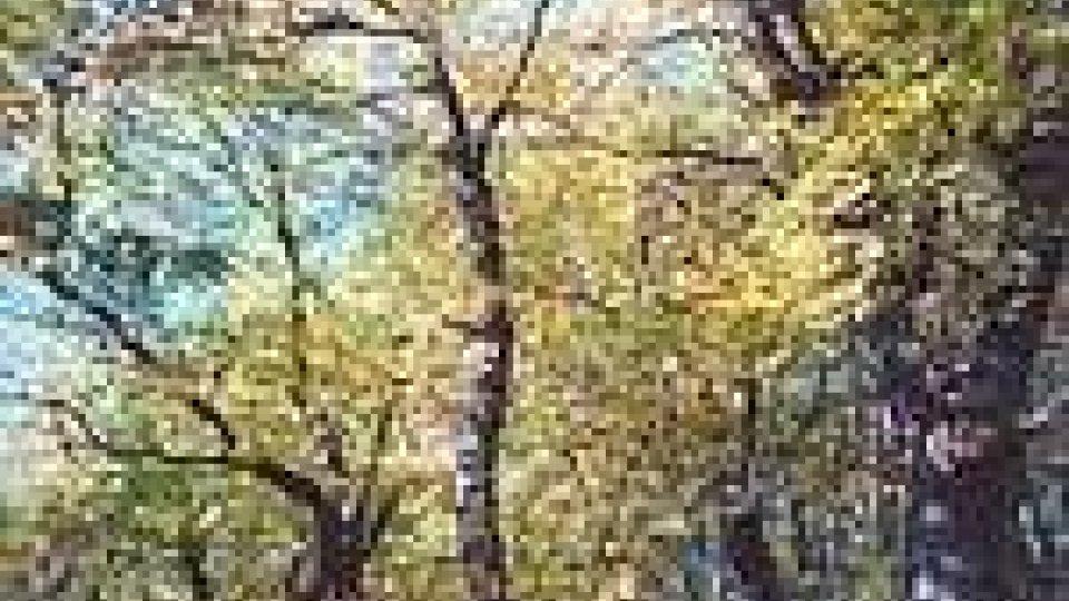 Una passeggiata nell'arboreto di Cà Vagnetto.