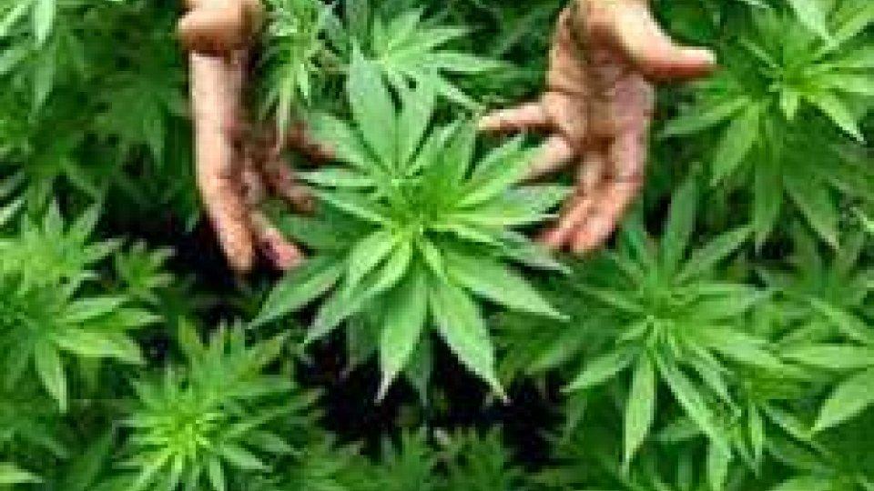 piantine di cannabisCannabis terapeutica: cosa potrebbe cambiare
