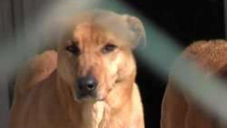 scosse ai cani che abbiano troppo, ma la legge lo vietaA San Marino scosse ai cani che abbiano troppo, ma la legge lo vieta