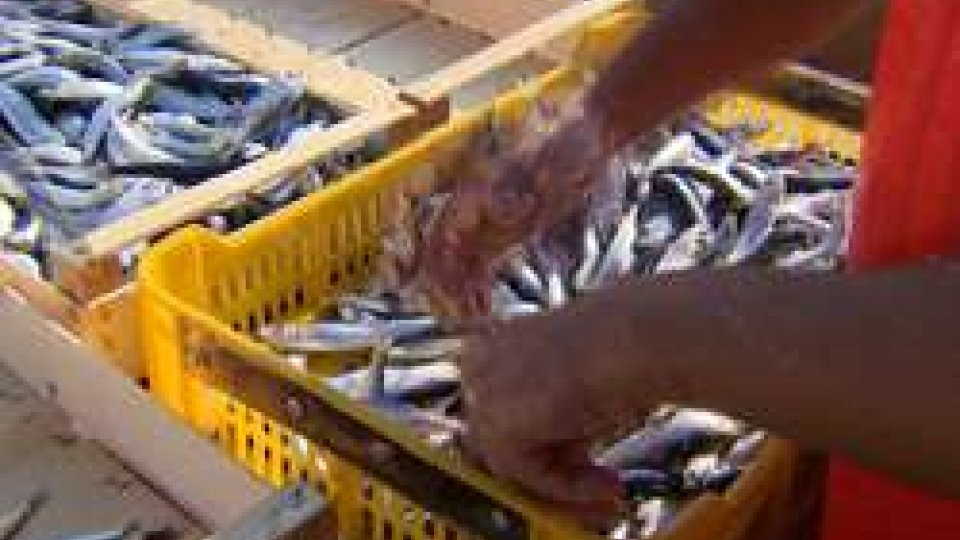 Affronte ha incontrato i pescatori di RiminiQuote Ue per il Pesce Azzurro: Affronte ha incontrato i pescatori di Rimini