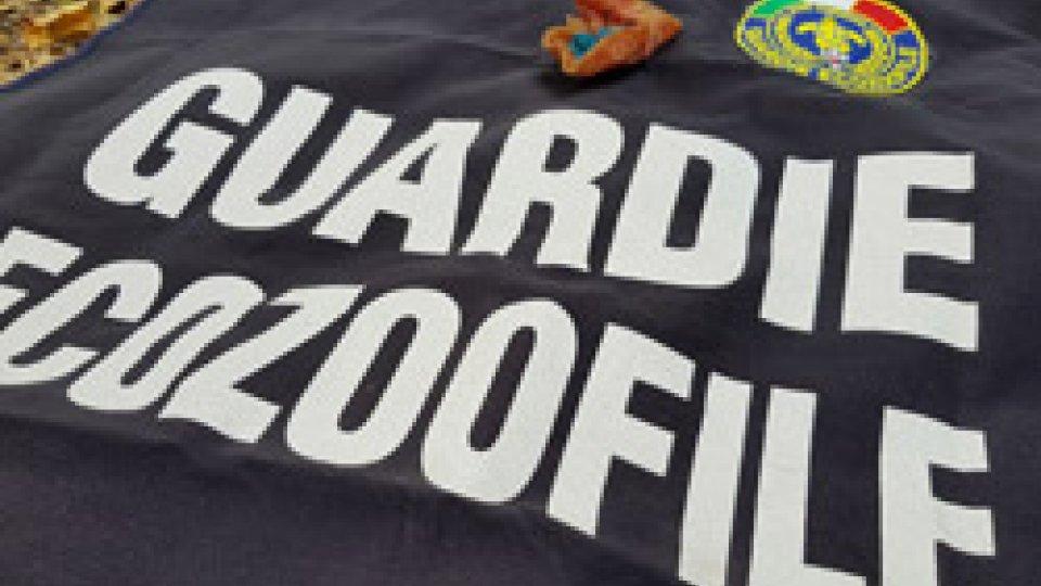 Polpette avvelenate killer: intervengono le Guardie Zoofile