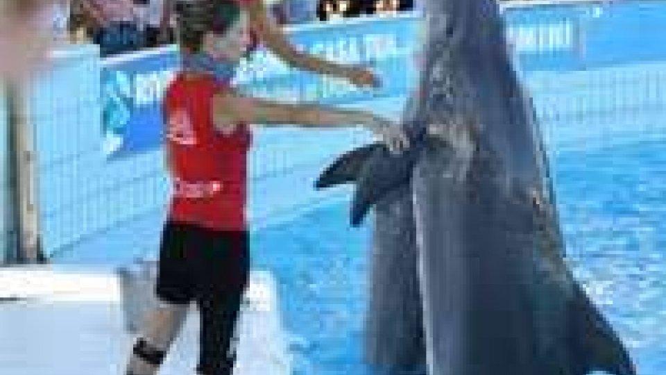 Via da Rimini: i delfini di Marina Centro a Genova.Via da Rimini: i delfini di Marina Centro a Genova