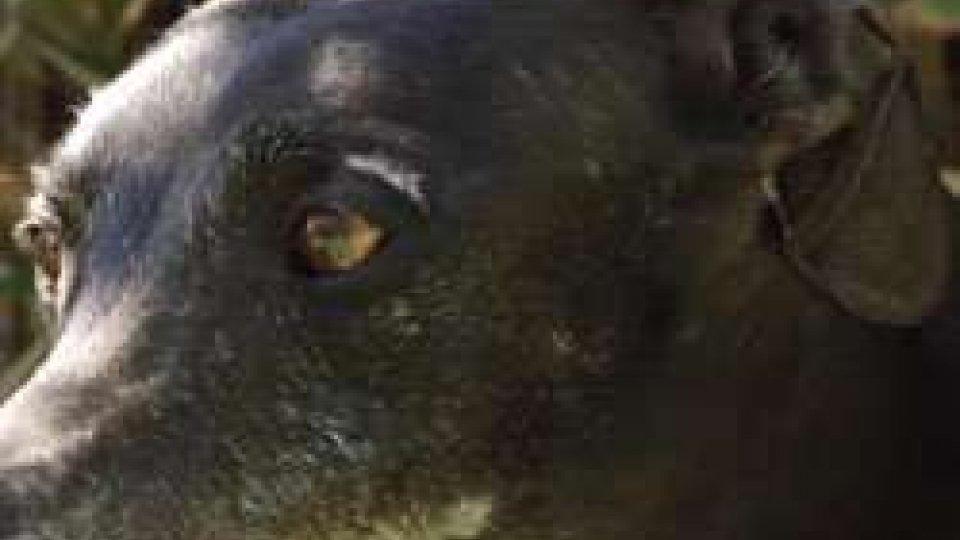 un seminario sulla educazione del caneSan Patrignano: un seminario sulla educazione del cane