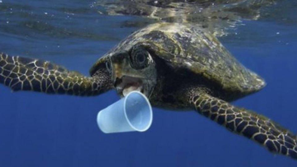 """Lotta alla plastica, ministro Costa: """"Tutti gli ecosistemi sono minacciati"""""""
