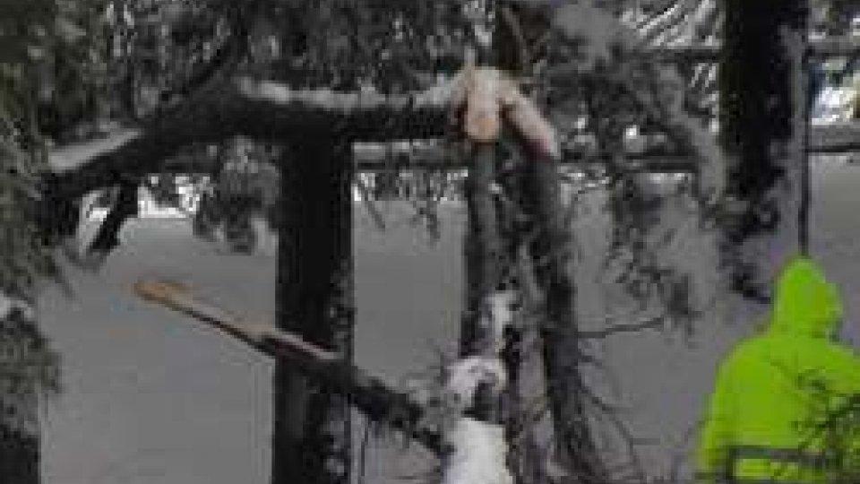 Alberi con rami spezzati dal peso della neveMaltempo: la neve inizia a sciogliersi, attenzione ora a rami e alberi
