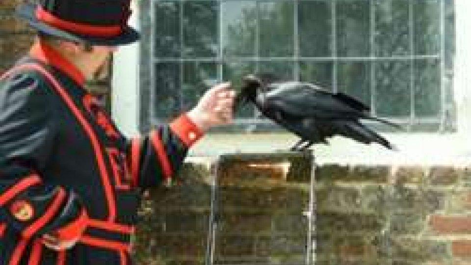 27 febbraio 2006: per paura dell'aviaria i corvi della Torre di Londra vengono rinchiusi dopo mille anni