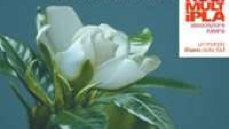 Per la festa della donna una gardenia solidale