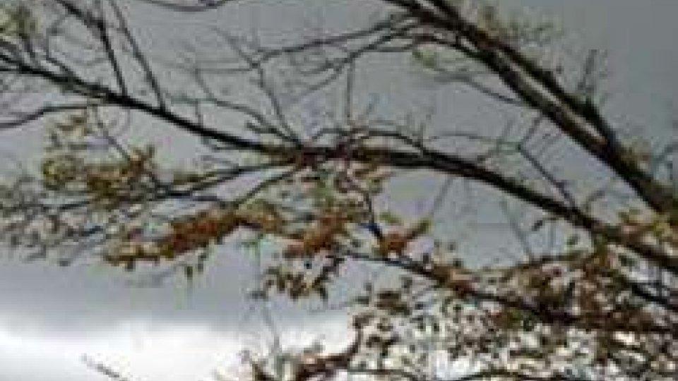 Maltempo: allerta vento sull'Appennino dell'Emilia Romagna