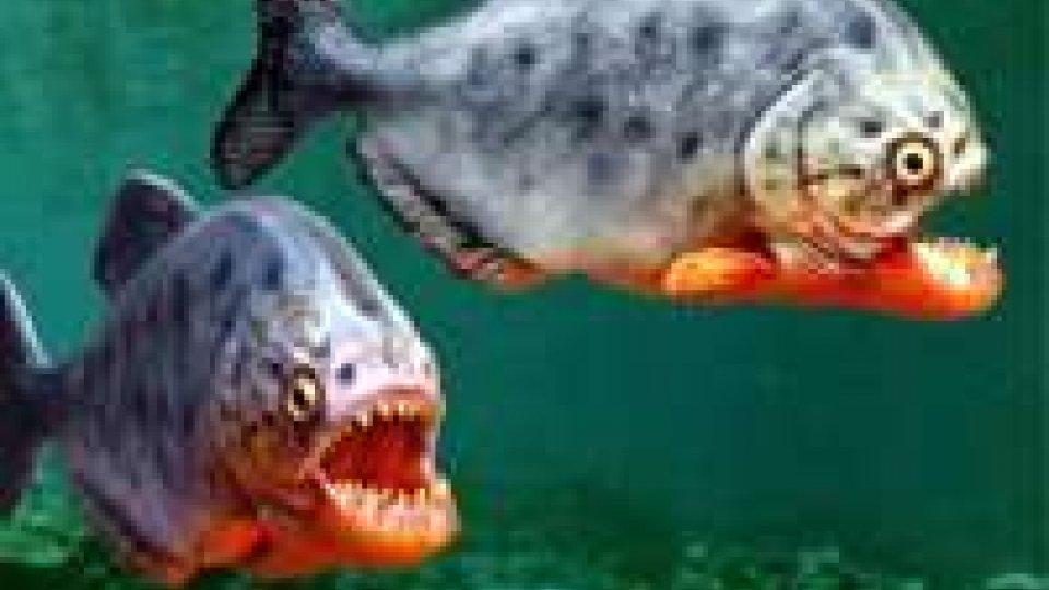 Argentina: piranha attaccano bagnanti, 60 feriti