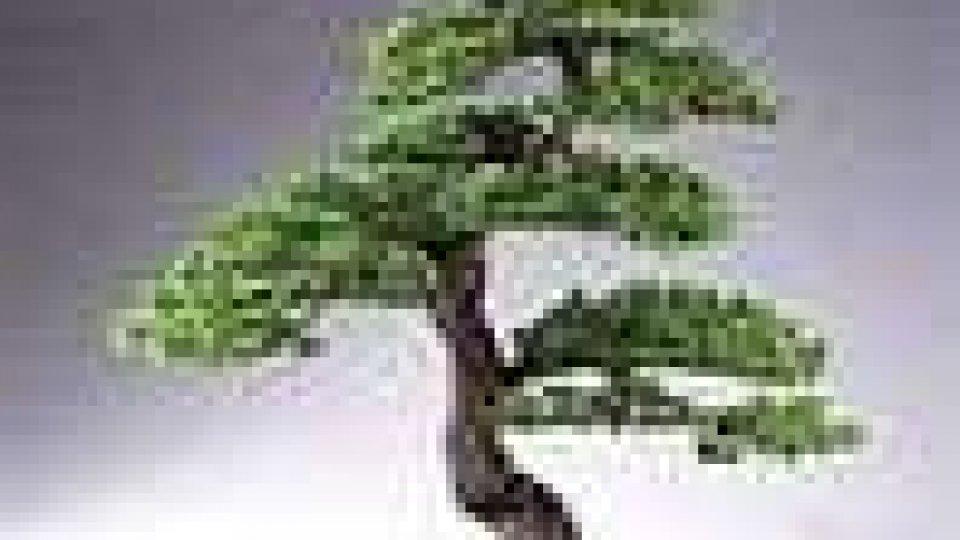 Conclusa al Kursaal convention bonsai
