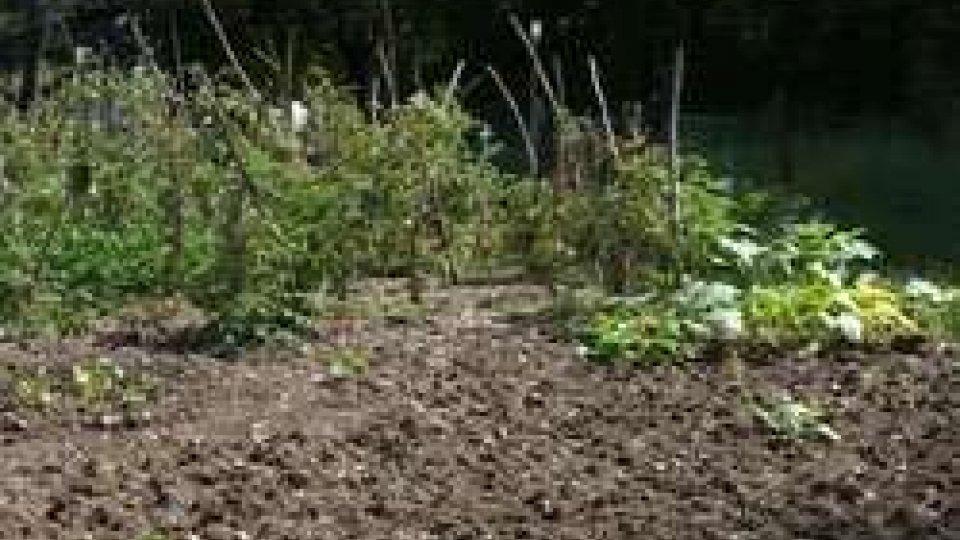 Fiorentino: orti abusivi, Ispettorato già informato della situazione