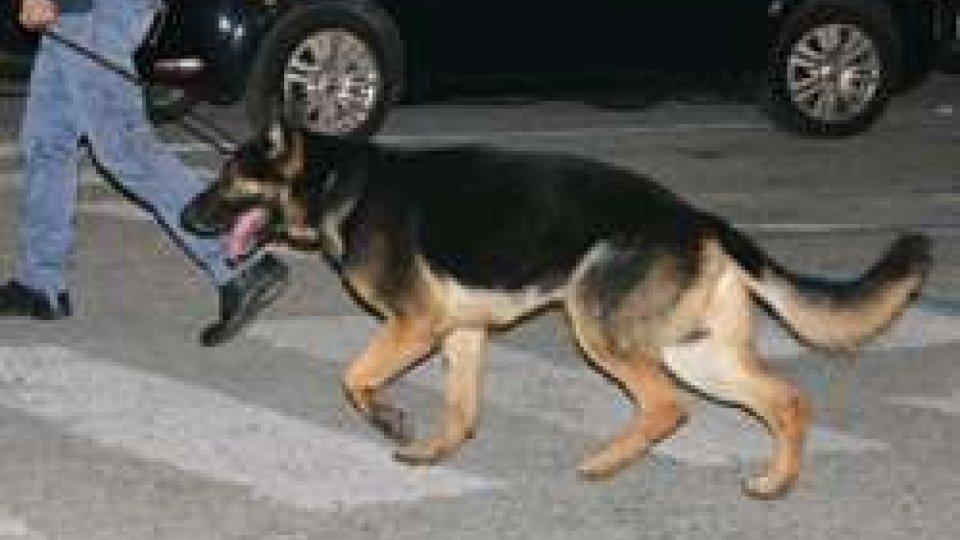 Il cane Gimbo