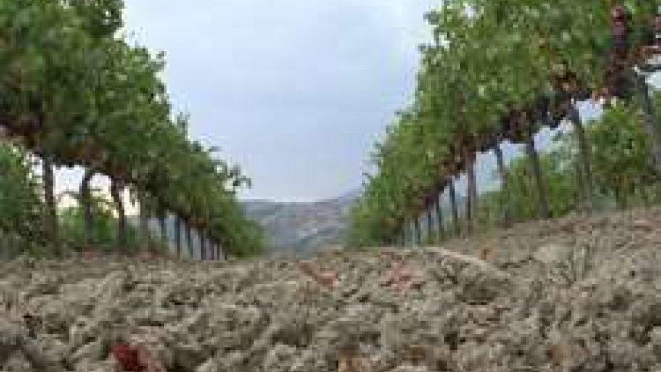 San Marino. Richiesto lo stato di calamità: perdite ingenti per l'agricoltura