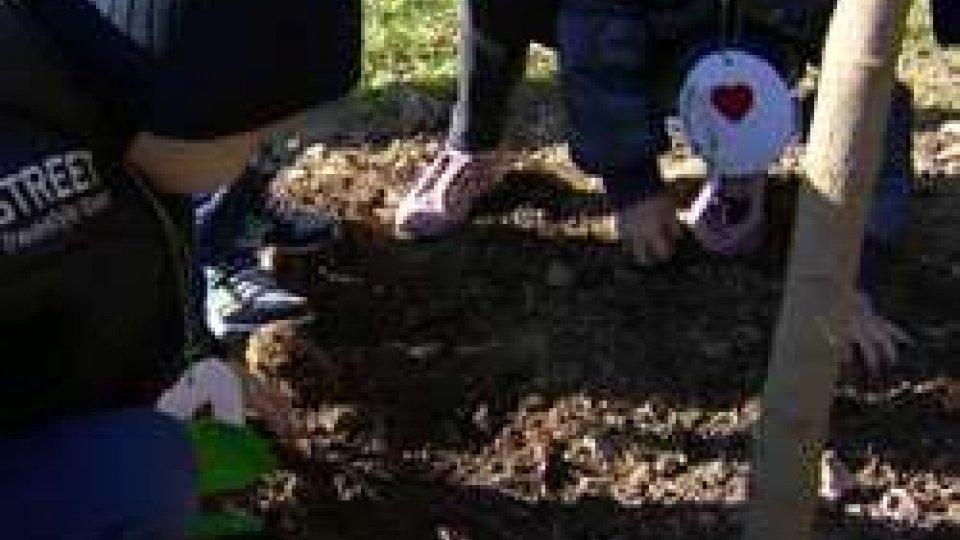 Fiorentino: un albero per ogni bambino natoFiorentino: un albero per ogni bambino nato, interviste