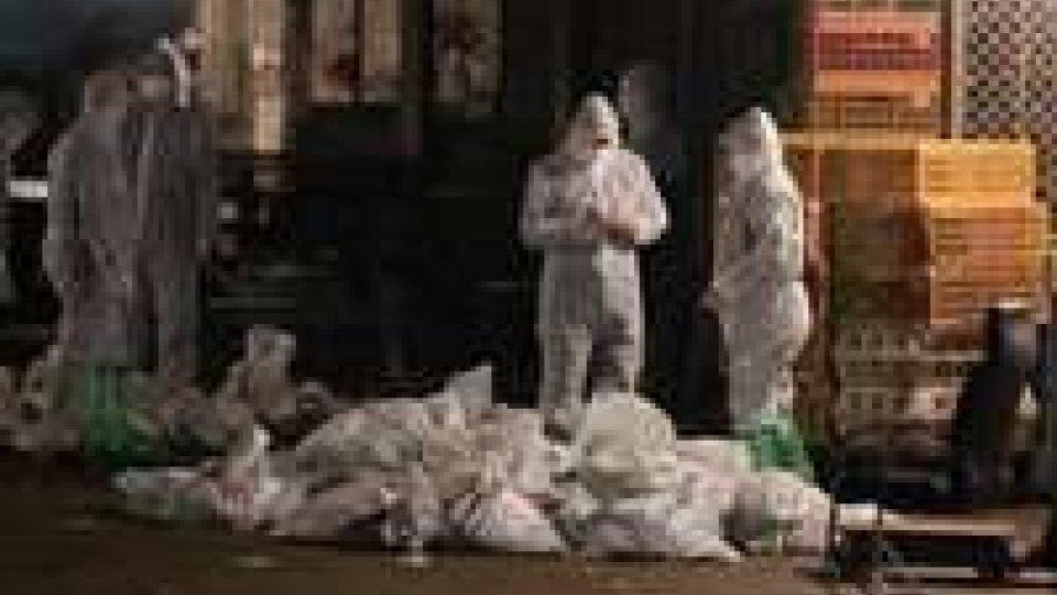 Aviaria: casi circoscritti in Cina
