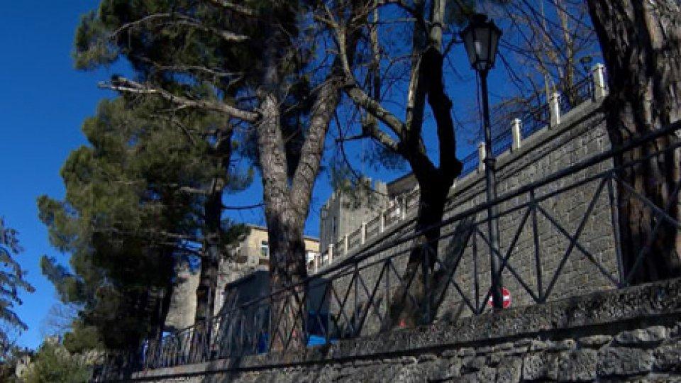 I pini marittimi di via Paolo III