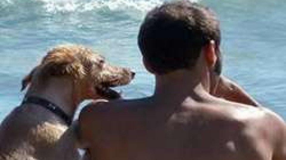 In acqua col proprio cane? A Rimini si può