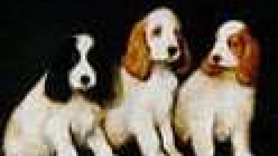 Cani spaventati dai botti del Capodanno