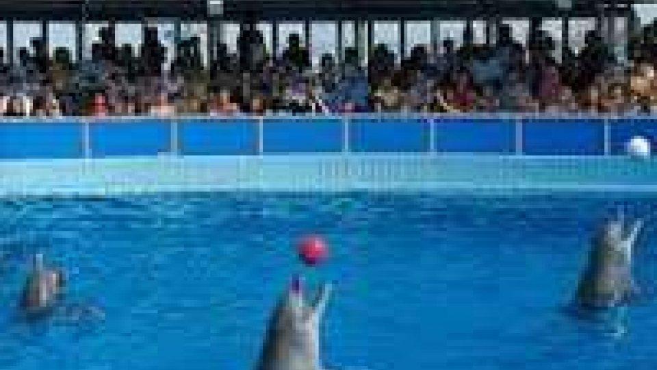 Rimini: a giudizio ex titolare ed ex veterinaria delfinario