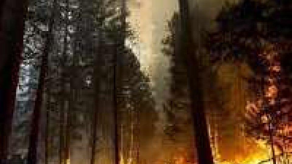 L'incendio allo Yosemite minaccia le risorse idriche di S. Francisco