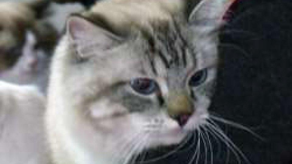 TitaniCat: al Palace Hotel in gara i gatti più belli del circuito World Cat Federation