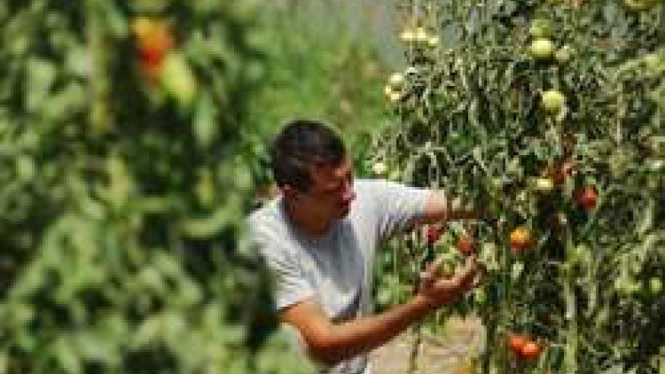 """Aumentano gli occupati, Coldiretti: """"L'agricoltura è il settore dove il lavoro cresce di più"""""""