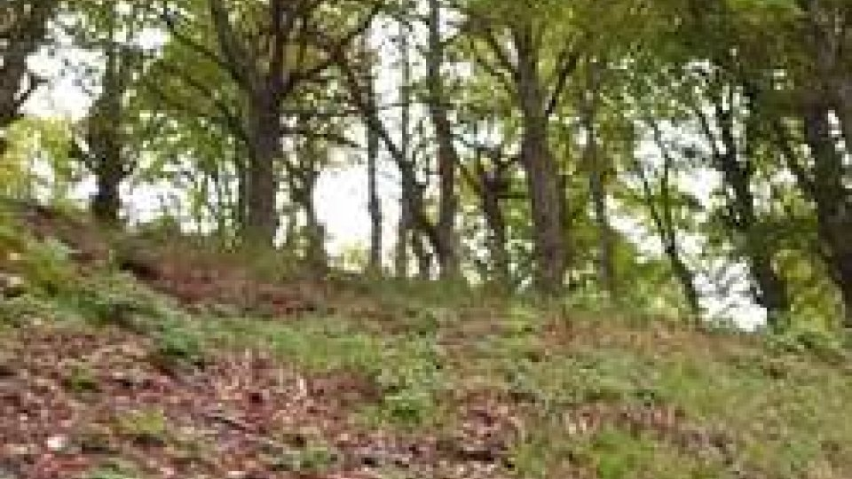 l'Emilia Romagna la regione che conta più alberi di tutta ItaliaÈ l'Emilia Romagna la regione che conta più alberi di tutta Italia, raggiungendo la superficie record di 611 mila ettari