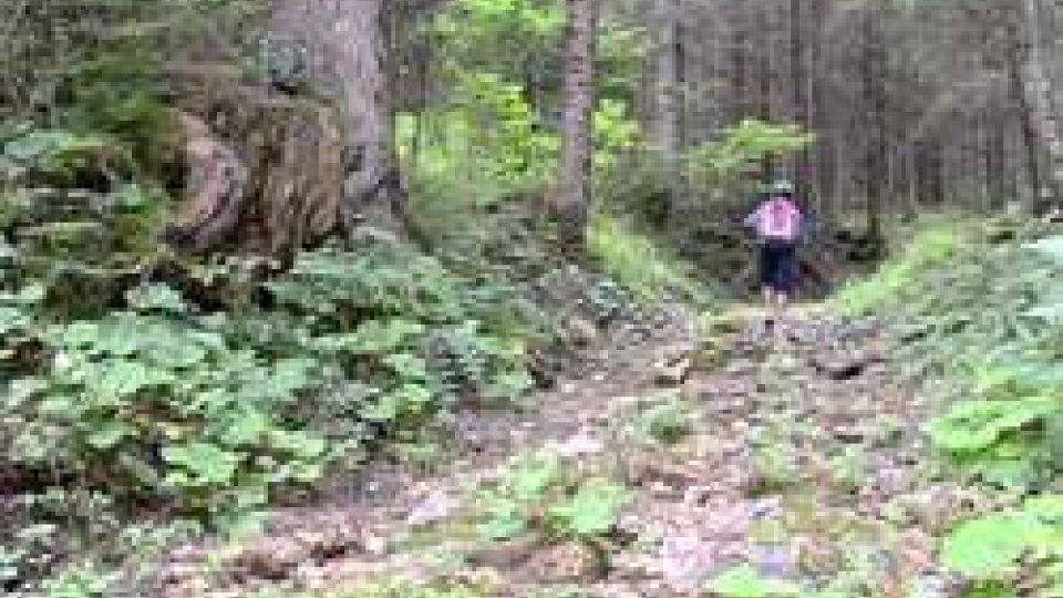 Scout si perdono nel bosco