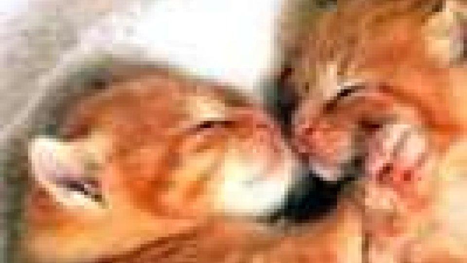 Cuccioli abbandonati: denuncia dell'APAS
