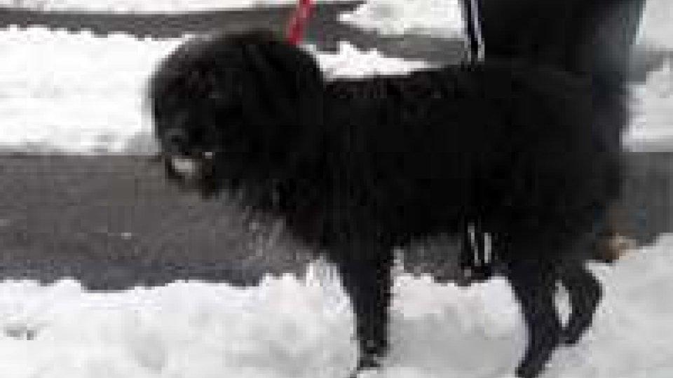 Trovato cane smarrito a Faetano
