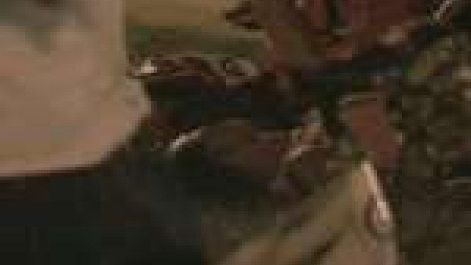 Incidente a Rimini: denunciato a piede libero l'uomo che ha falciato due pedoni