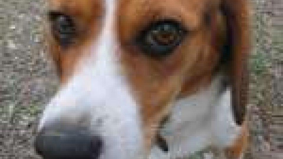 San Marino - Cani avvelenati: ancora due casi