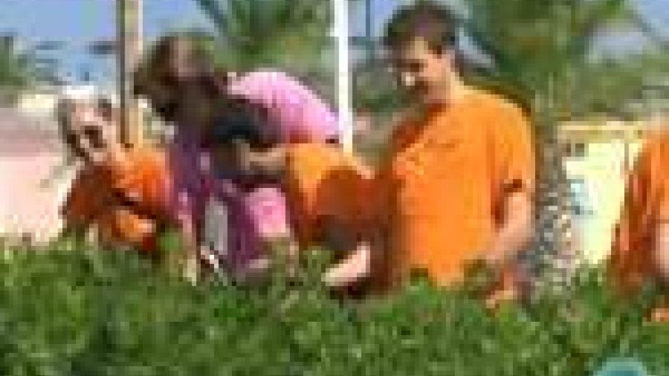 """I promotori della """"9 bar"""" impegnati a ripulire le siepi di RiminiI promotori della """"9 bar"""" impegnati a ripulire le siepi di Rimini"""