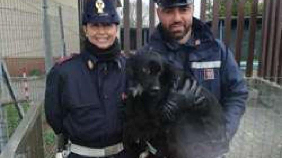 Pasqua: il bilancio della Polizia di Stato di Pesaro