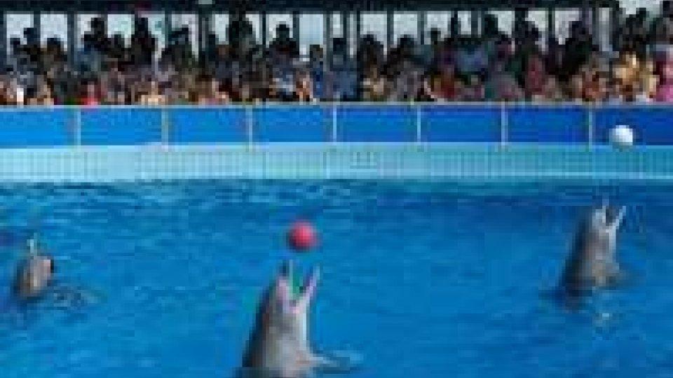 Chiusura delfinario Rimini: ambientalisti chiedono di non aprirne altri