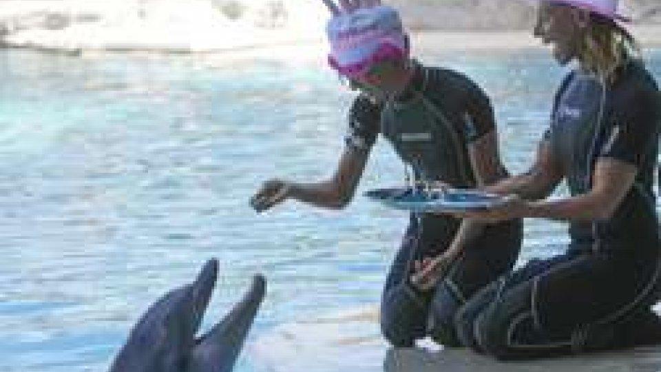 La Notte Rosa nei parchi Costa: schiuma dance, emozioni notturne e il compleanno dei delfini Blue e Golia