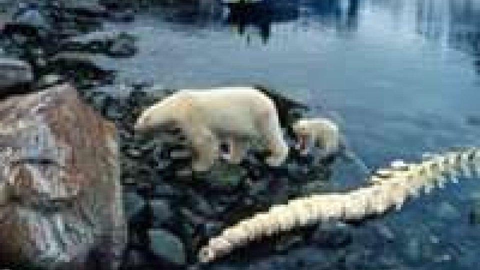 """To The Arctic, il film """"glaciale"""" narrato da Meryl Streep"""