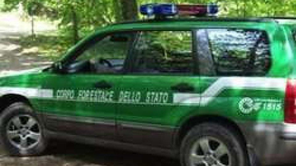 Fungaiolo sammarinese multato di 550 euro per violazione di una foresta protetta