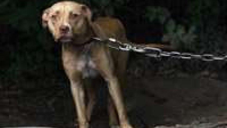 Catena per i cani: a San Marino si punta all'abolizioneCani alla Catena: gli animalisti non cantano vittoria