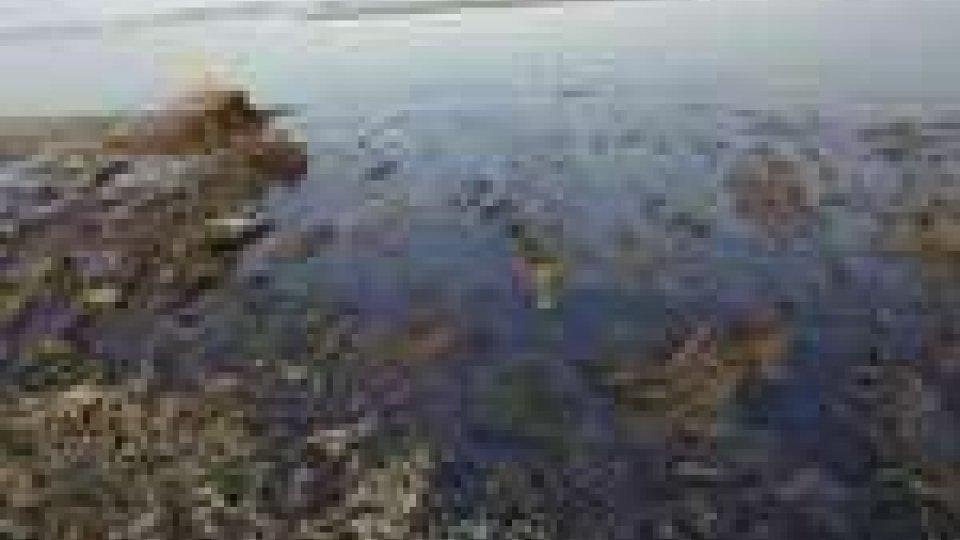 """Marea nera"": prosegue Top Kill"