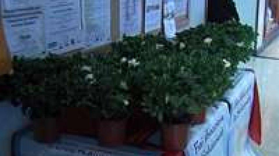Gardenie dell'ASSM per la festa della donna