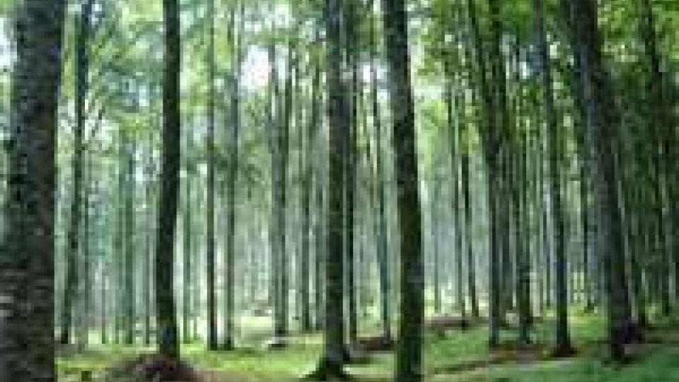 Giappone: spopolano le foreste-cimitero