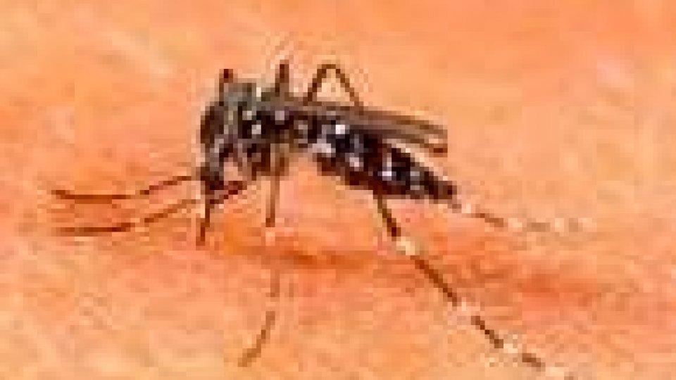 Zanzara tigre: rilevata la presenza a Falciano e Acquaviva