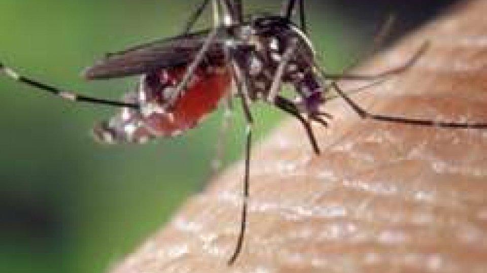 In vigore da domani l'ordinanza per la prevenzione e il controllo delle malattie trasmesse da insetti vettore