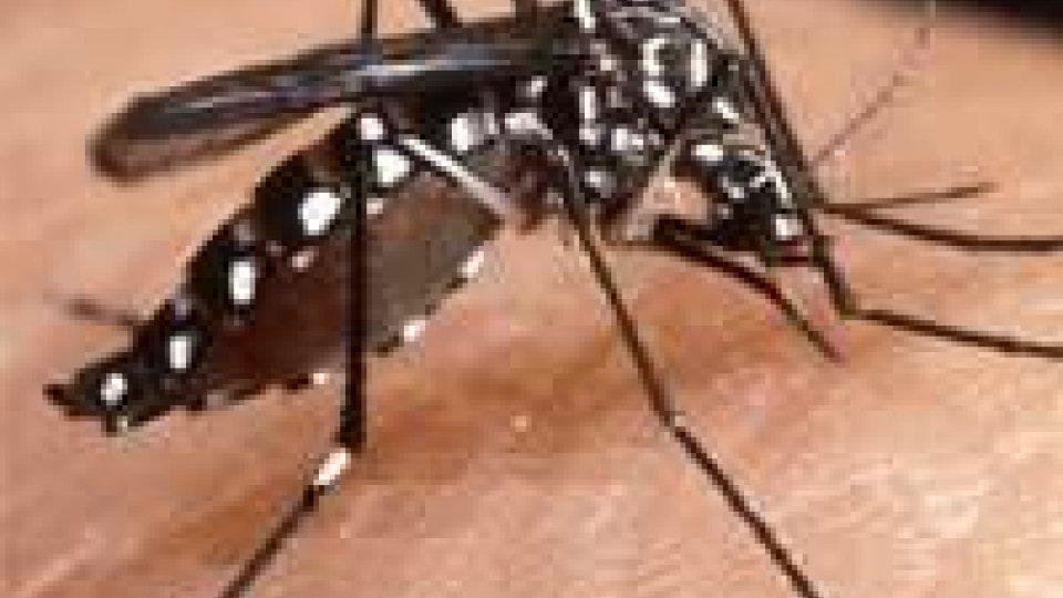 Partita la caccia alla zanzara tigre