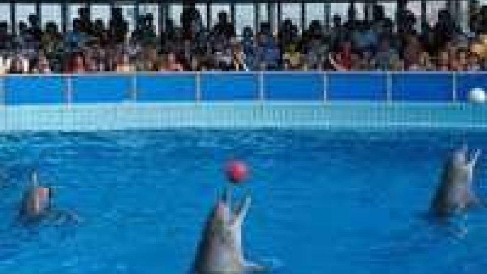 Le associazioni animaliste chiedono la chiusura del Delfinario