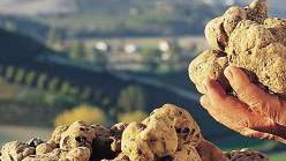 Ultimo week end per la fiera del tartufo di Acqualagna