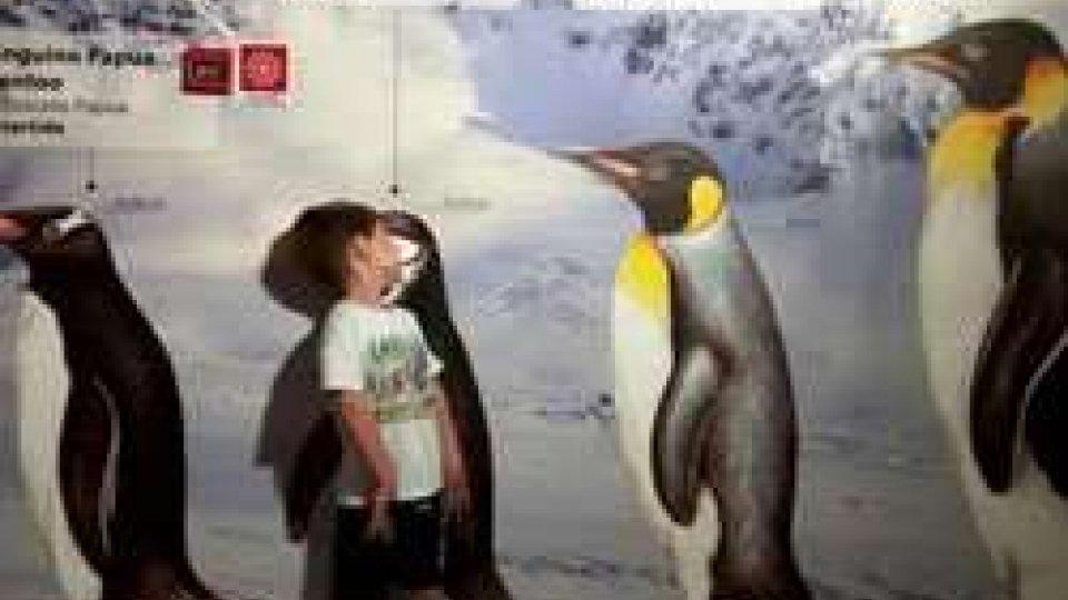 sulle orme dei pinguini